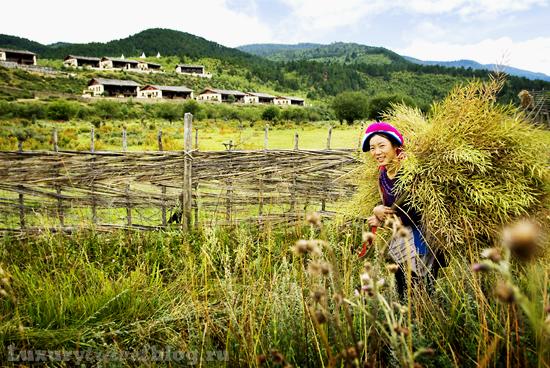 Юннаньские баньяны