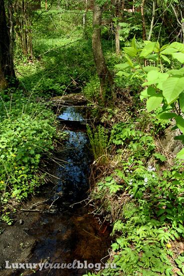 Ручей лесной, Подмосковье, Россия
