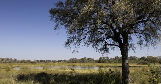 Новый лодж в Ботсване — от Wilderness Adventures (группа Wilderness)