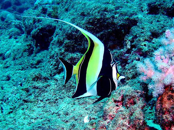 Миры Маврикия: лучшие отели и лучшие дайв-сайты